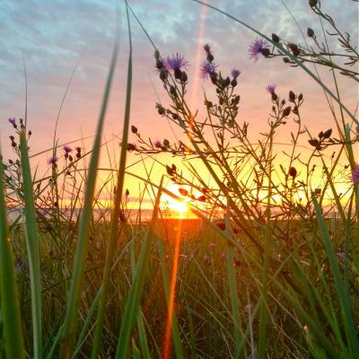 Sunrise Town Neck Lillibridge
