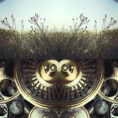 cog grass lisa lillibridge wordpress