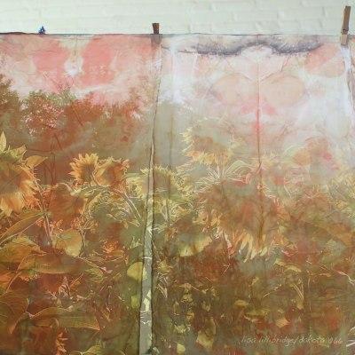 sunflowers elizabeth bunsen and lisa lillibridge