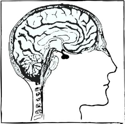 brain its the way it is lillibridge