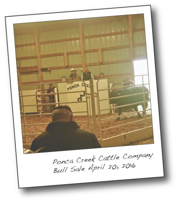 ponca creek cattle company lillibridge