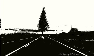 christmas-tree-south-dakota-lillibridge