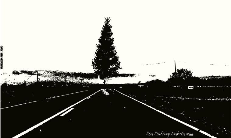 christmas-tree-south-dakota-lillibridge
