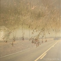 lisa-lillibridge-south-dakota-two-lane-beach-flowers