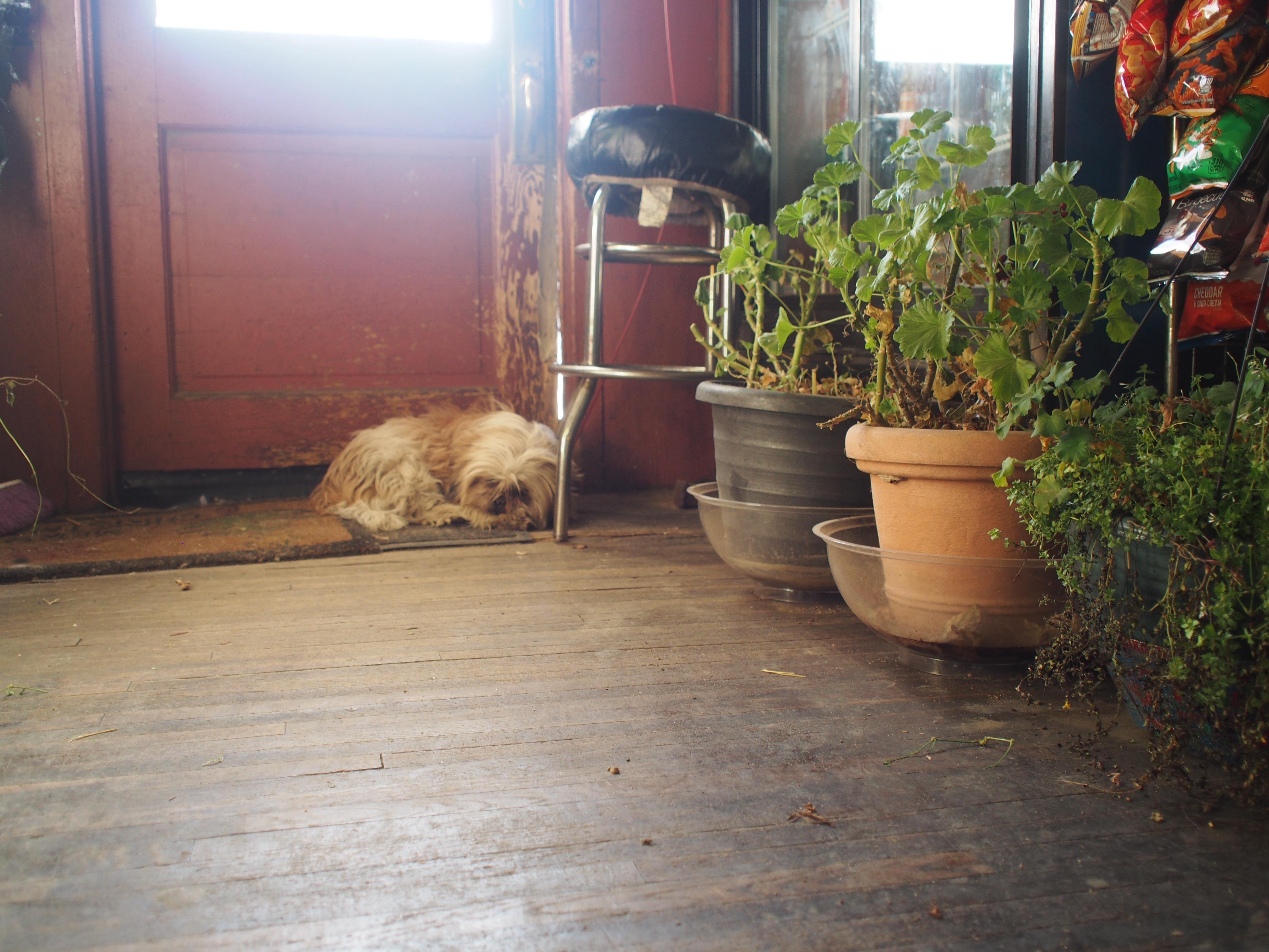 dog by door at Bernie's Inn