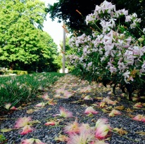 square flowers on path